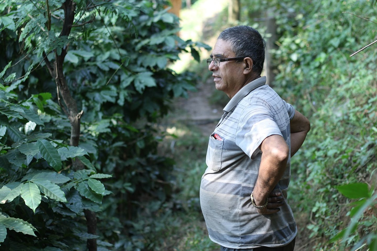 Nepali coffee farmer