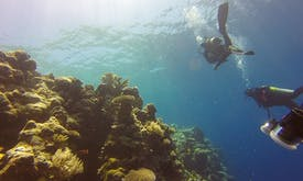 Watch how corals 'violently' bleach as sea temperatures rise