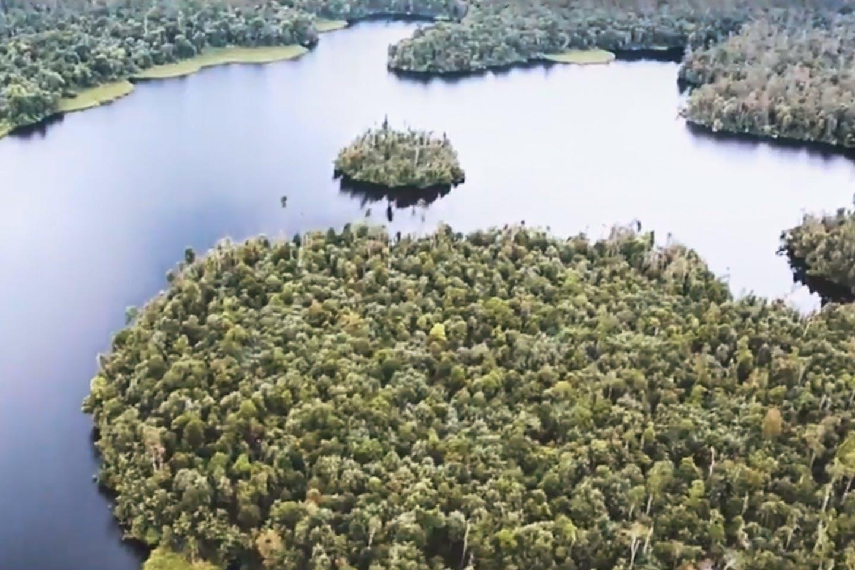 Restorasi Ekosistem Riau