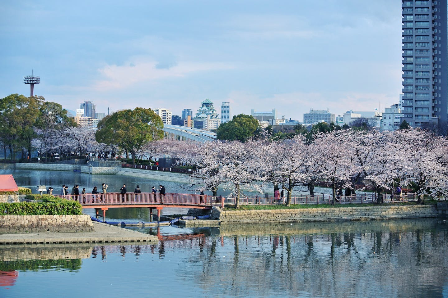 Cherry blossom trees bloom in the city