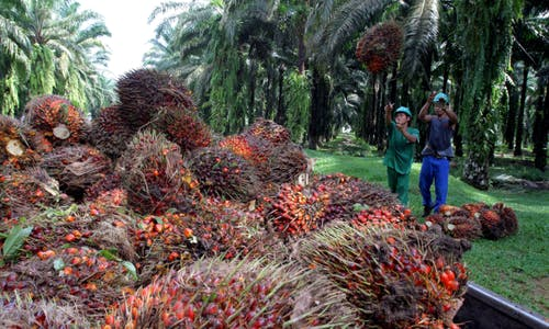 Getting our act together: Sustainability in the Malaysian palm oil industry