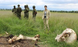 Asia must say no to ivory to end elephant poaching, illegal trade