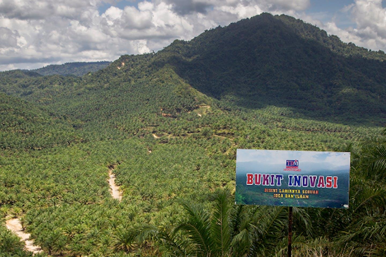 tdm bhd oil plantation estate