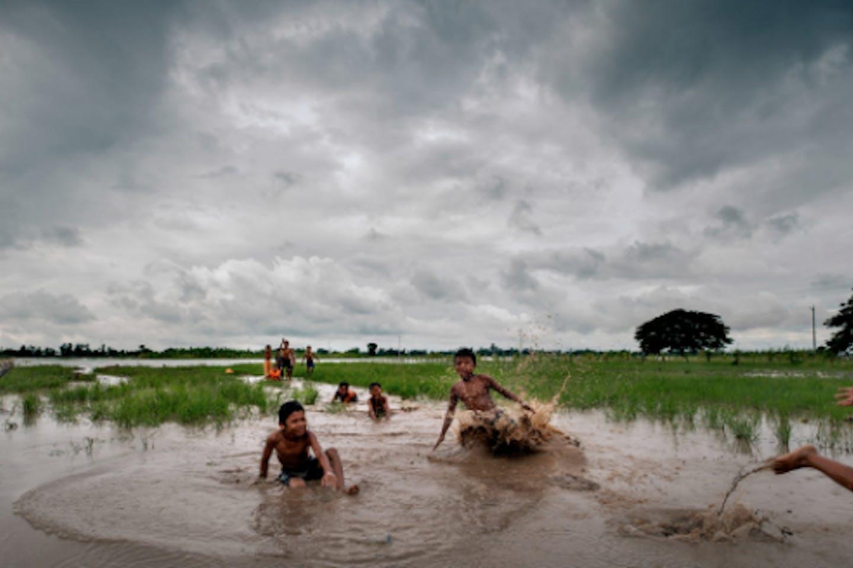 cambodia rice fields