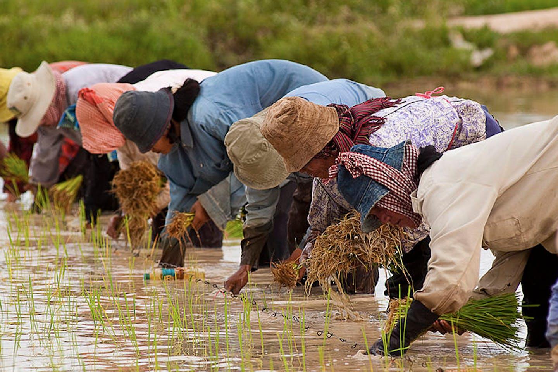 cambodian farmers3