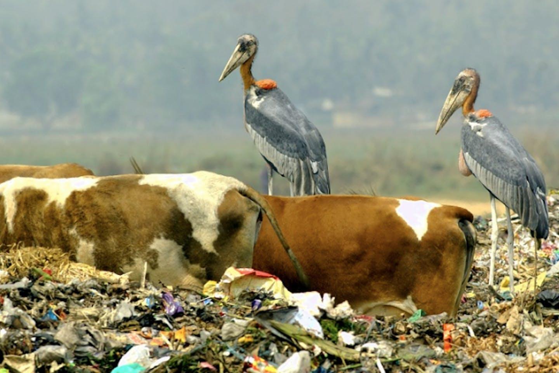 india gabage dump