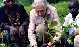 Jane Goodall returns to Tanzania for tree-planting mission
