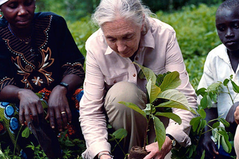 Jane Goodall Good for All News