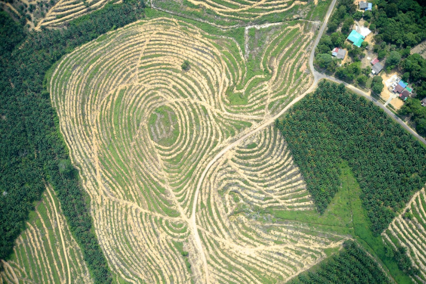 A palm oil plantation from above in Malaysia