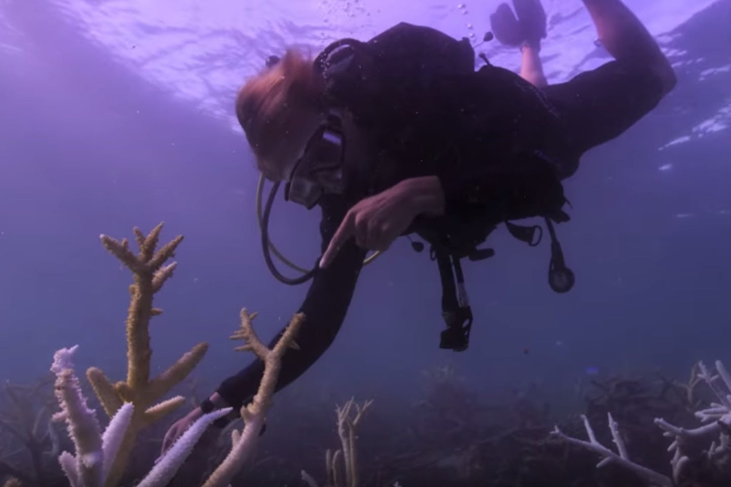 A scene from Chasing Coral, one of the films to feature at the Singapore Eco Film Festival this year. Image: Netflix