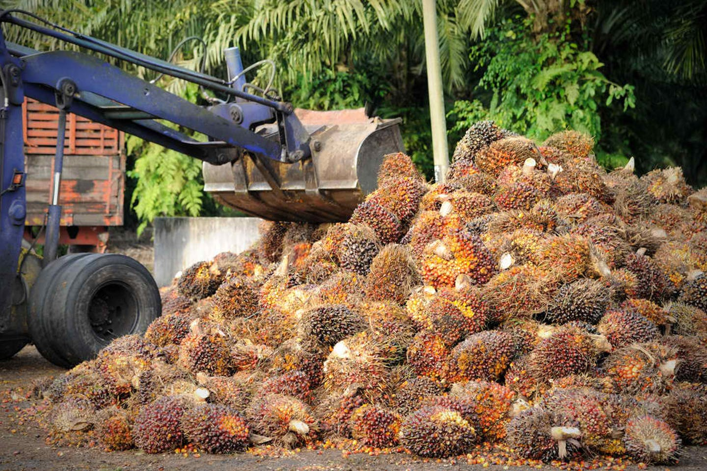 palm oil truck loading