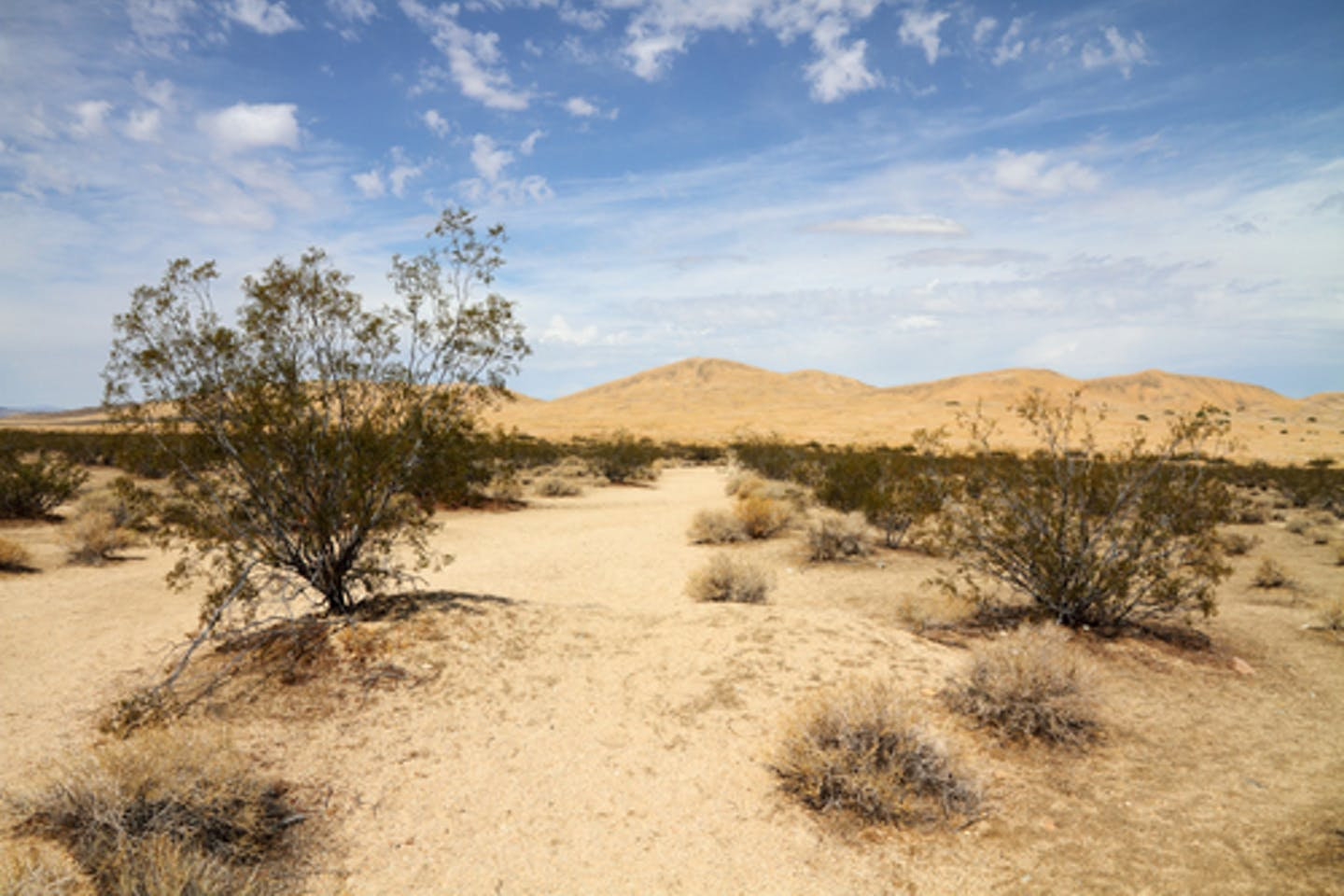 California desertification