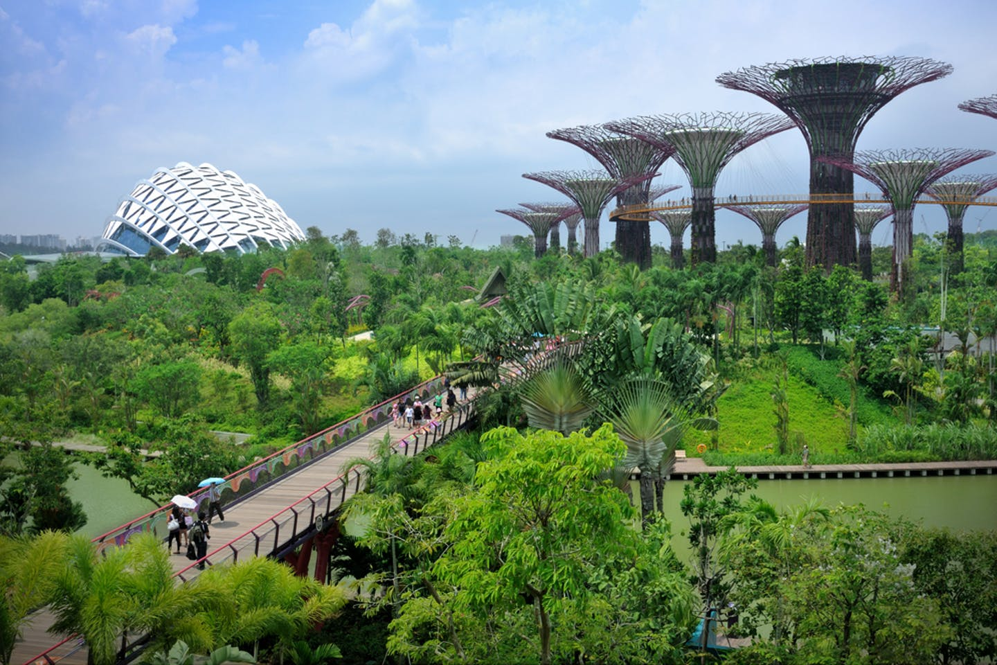 spore biophilic cities