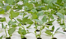Aquaponics allows for emission-free sustainable food production