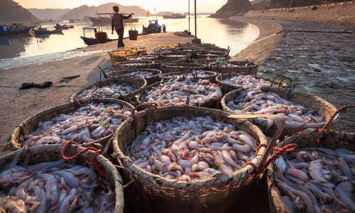 The rising tide of sustainable seafood