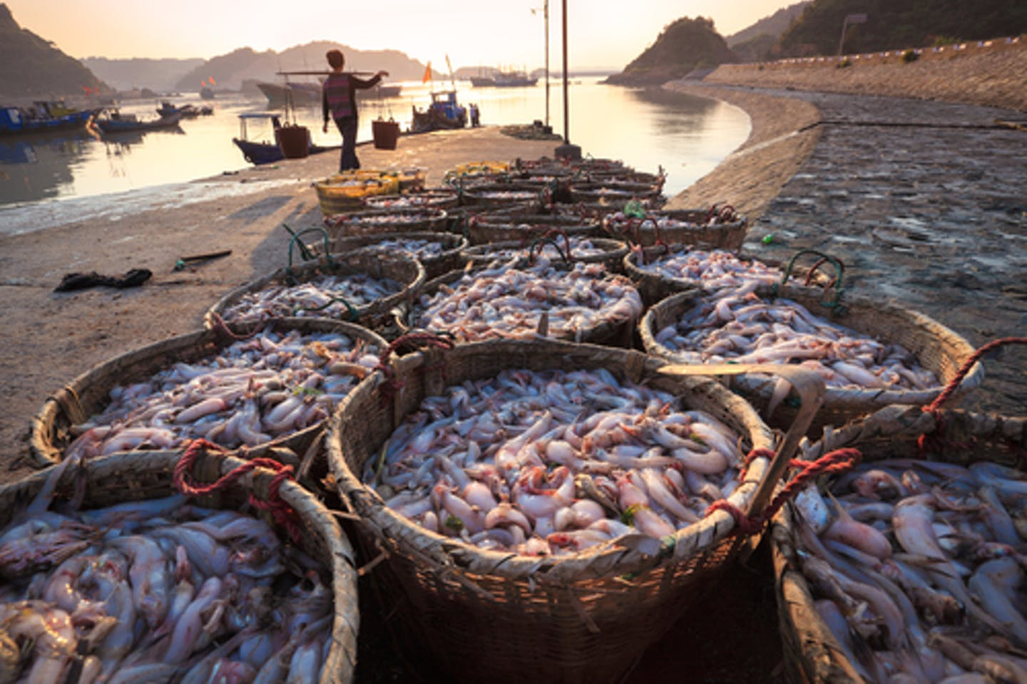 Sustainability of seafood industry
