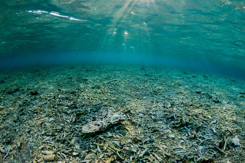 Ocean degradation