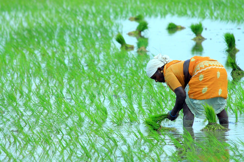 economist farmers