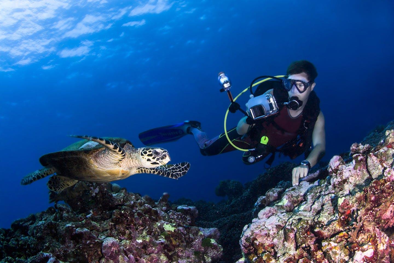 thailand diver sea turtle