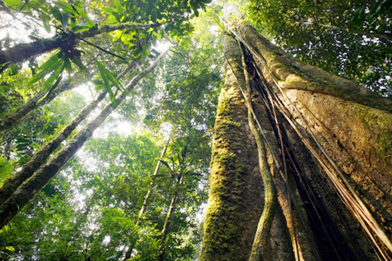 Ecuador rainforest