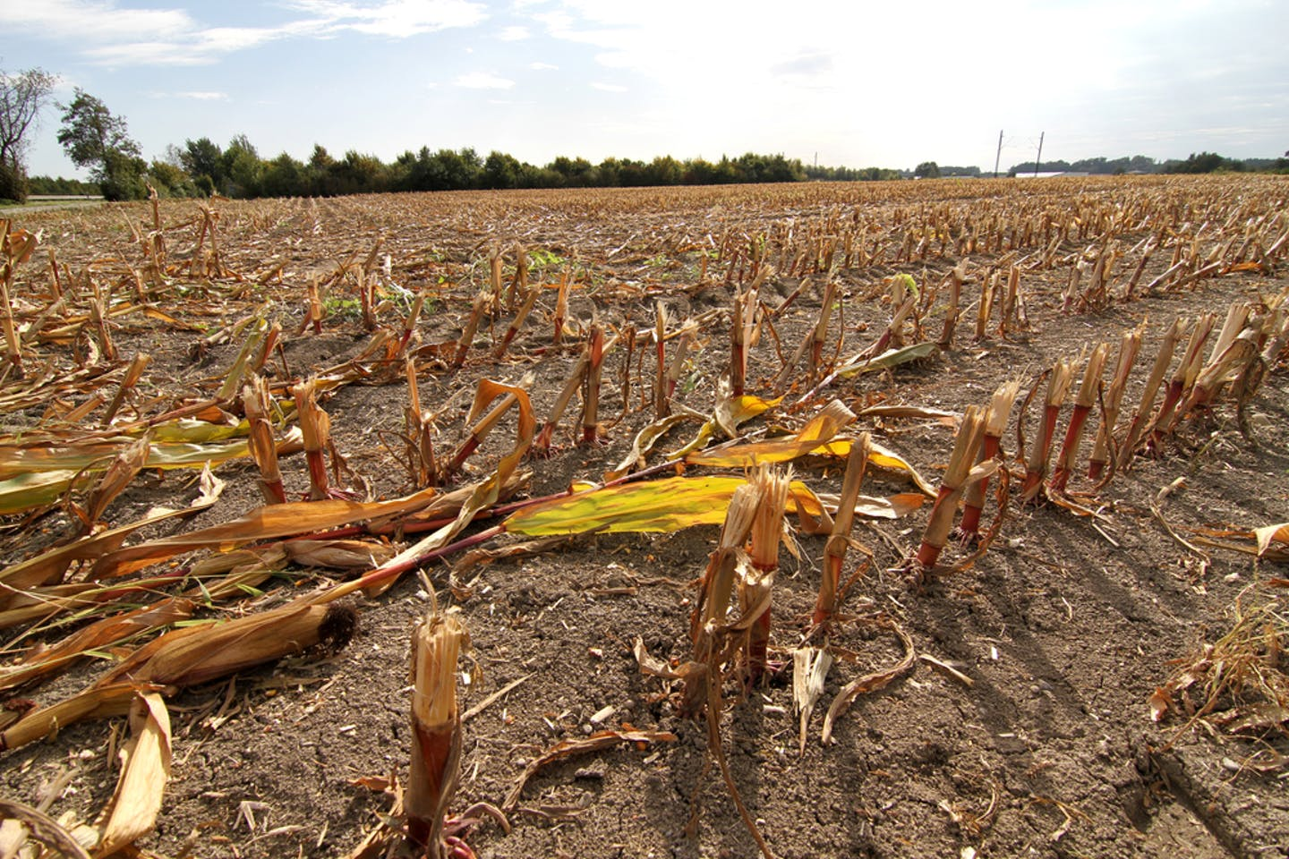 drought crops