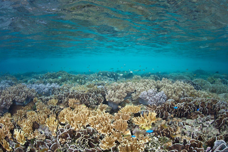 ocean geoengineering