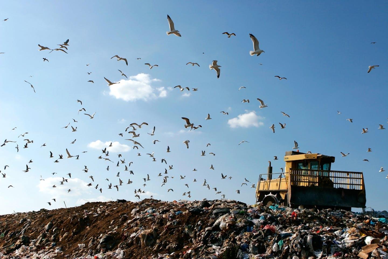 landfill birds bulldozer