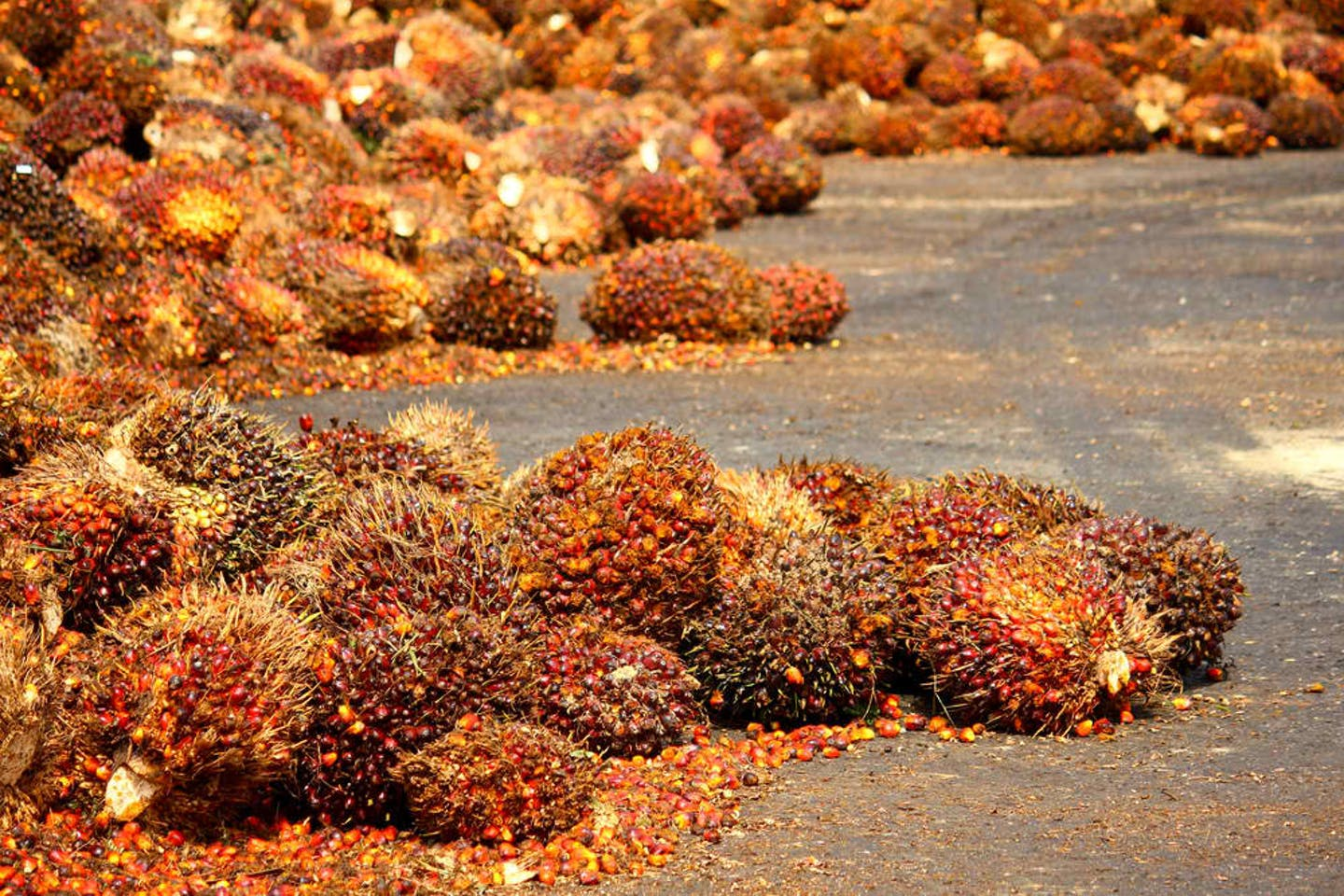 palm oil fruits spread