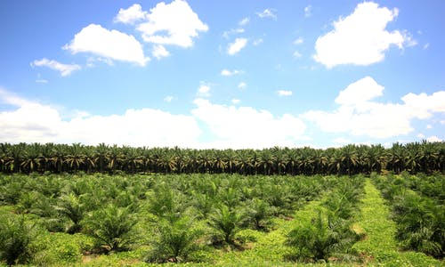 'China speed' needed for a breakthrough in sustainable palm oil