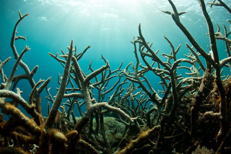 CO2 in ocean