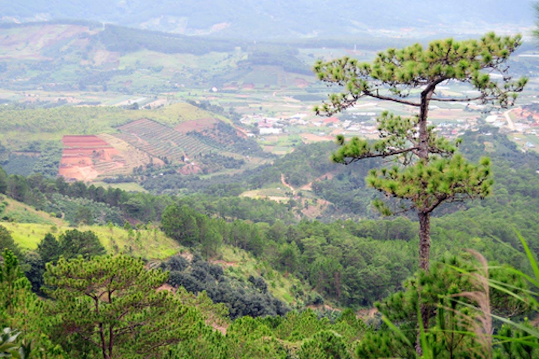 Southeast Asia deforestation