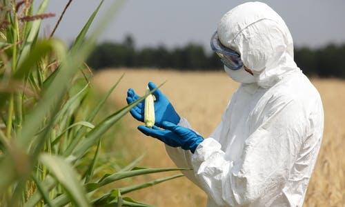 The GMO stigma