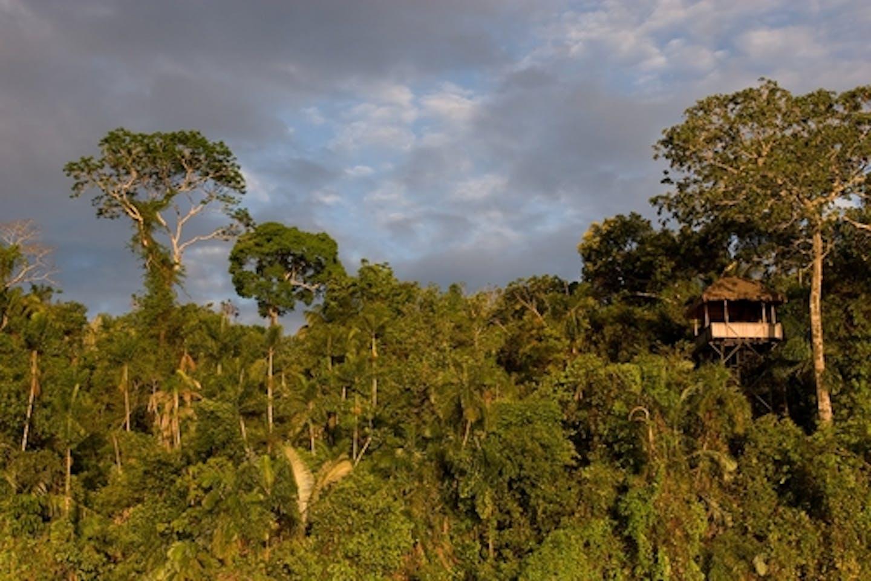 Peru's zero deforestation drive