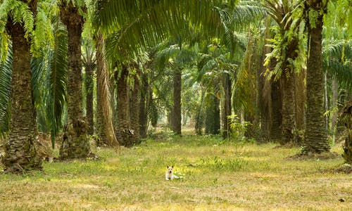 What is sustainable palm oil?