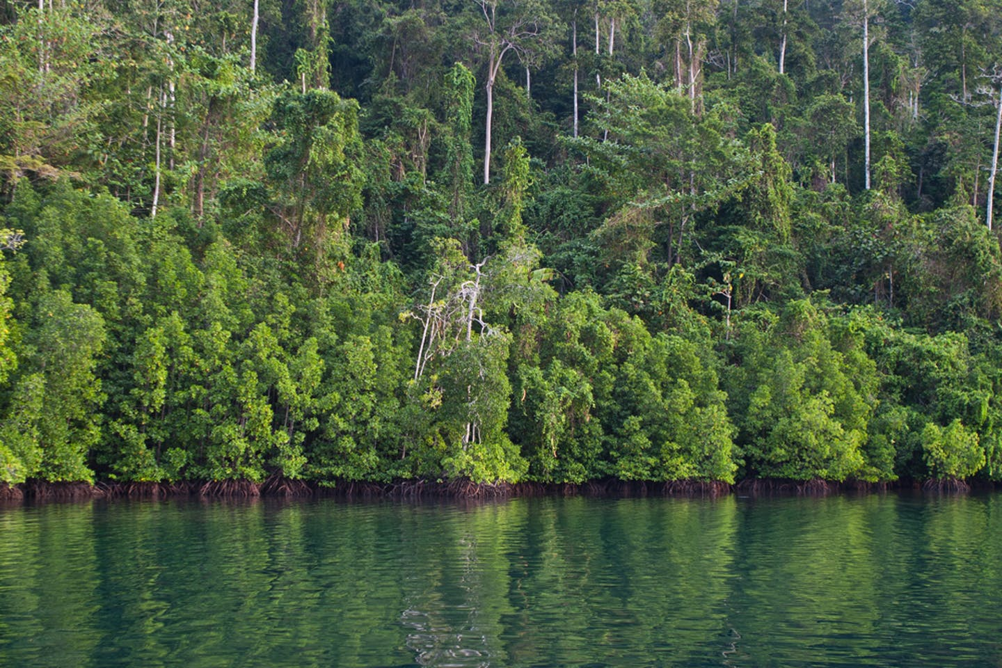 indonesia lagoon forest