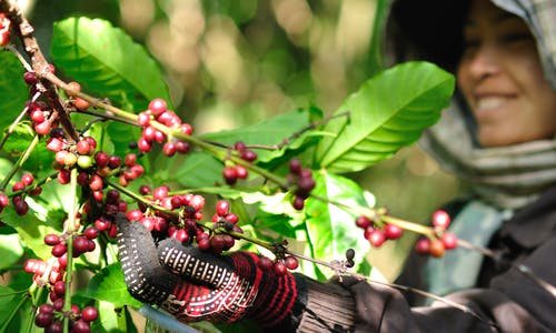 SMEs are making strides toward sustainable sourcing