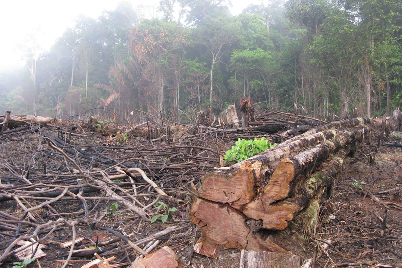 brazil deforest crime