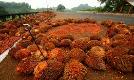 Indonesia defends deforestation for palm oil on economic grounds