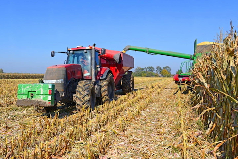 Corn for biofuel