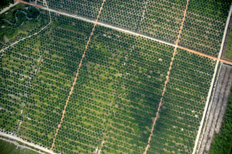 plantations aerial grid