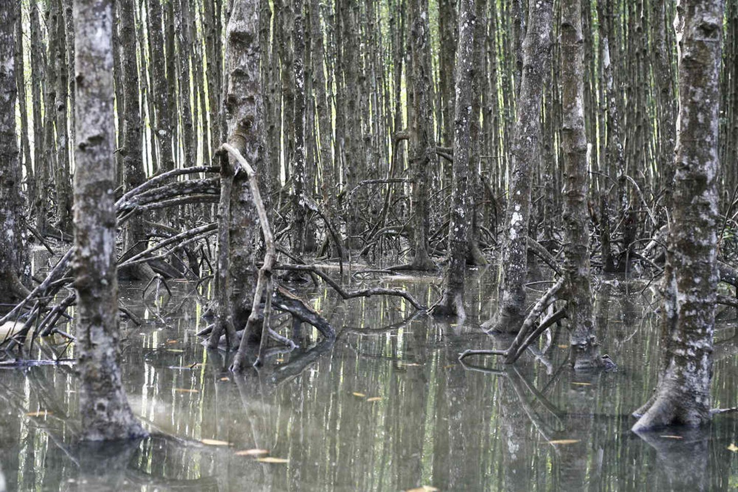 can gio mangroves viet