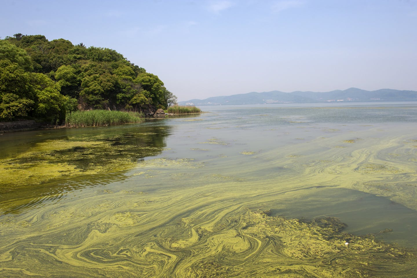 Toxic river in China
