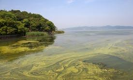 Fertilisers help toxic algae thrive in warming world