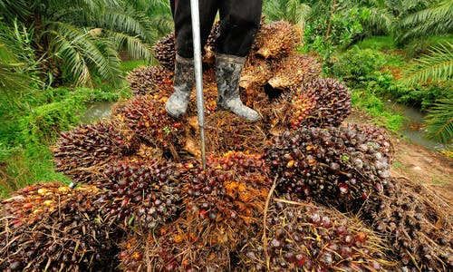 Can the palm oil industry ever be fully sustainable?