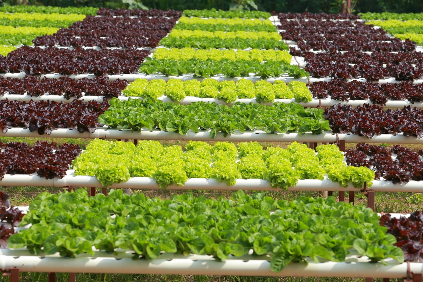 crops cultivation hydrop