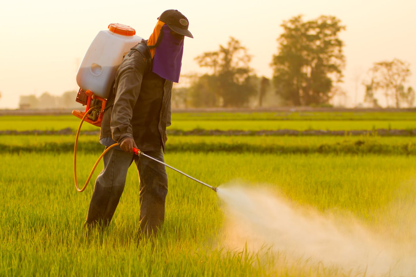 worker spraying herbicide
