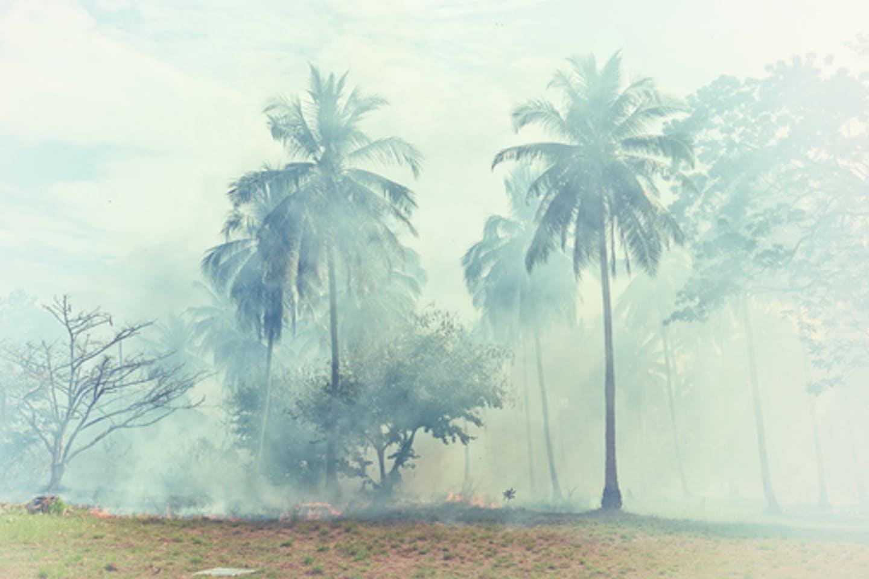 land clearing burning