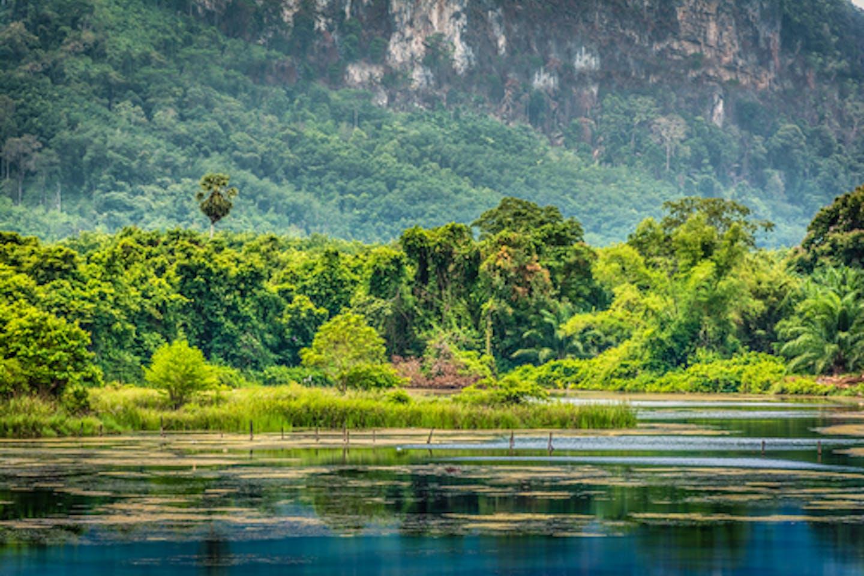 tropical rainforest thailand