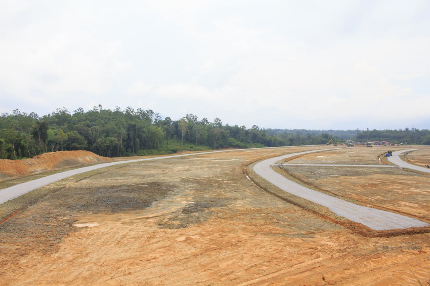 deforested land for palm oil