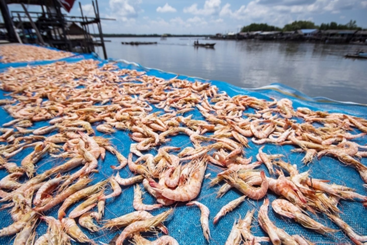 Shrimp farming industry
